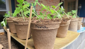 Growing Food: Planting Your Spring Vegetable Garden