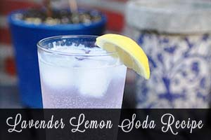 Homemade Lavender-Lemon Soda!Herbal homemade soda is quite simple actually.  Almost any herb can be used, and this lavender and lemon combination is cooling and refreshing!