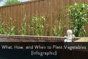 I love infographics. When I came across this one about what, how, and when to plant vegetables, I thought I'd share. Keep reading after the pic for a few of my own lessons learned.
