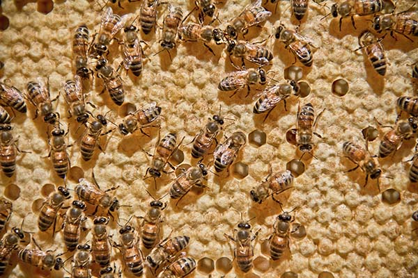 Honey by the People: How Beekeeping Turned from Hobby to Passion