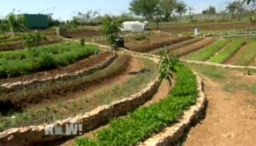 What's the future of organic farming in Cuba? In Cuba, organic farming is the norm by default. Now that U.S.-Cuban relations are improving, what will the future of Cuba's food production look like?