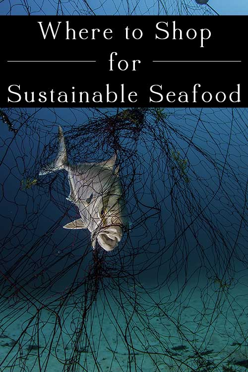 Every year, Greenpeace compiles a sustainable seafood list. Now in its ninth year, the Carting Away the Oceans report ranks the top retailers in the nation based on the sustainability of their seafood.