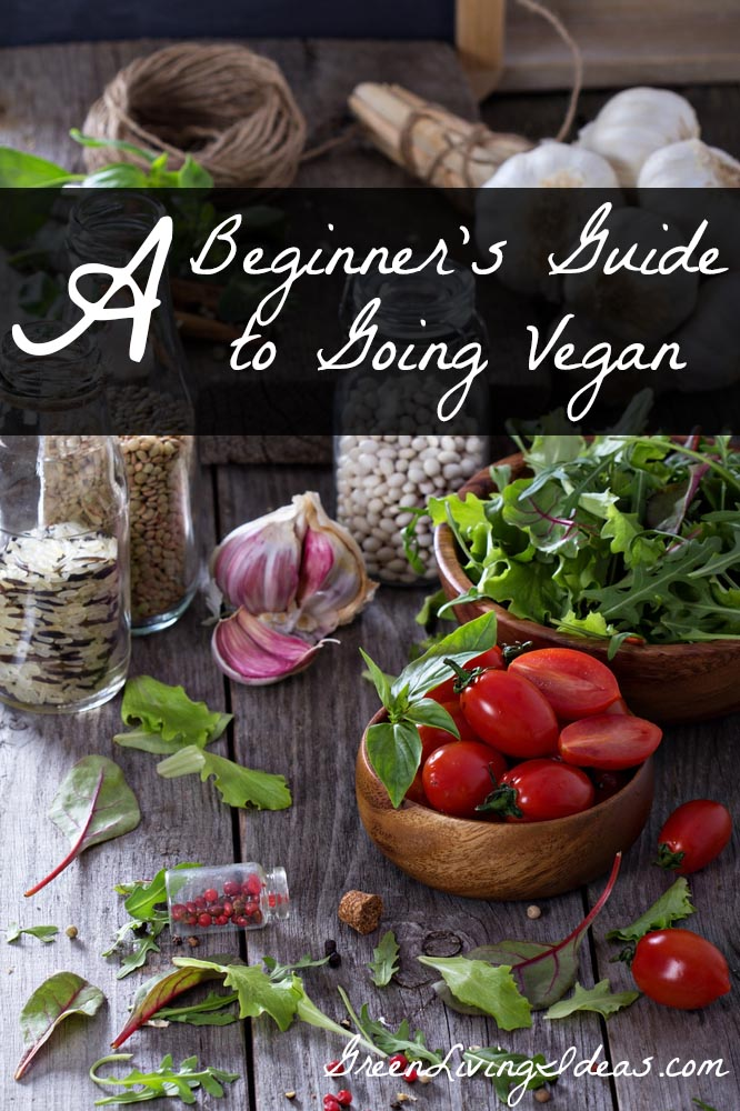 A Beginner's Guide to Eating Vegan