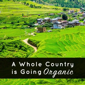 Bhutan, the first country to pledge to go fully organic by the year 2020. This is a big deal for those passionate about organic foods and has the potential to make a big impact on food and farming policy around the world.