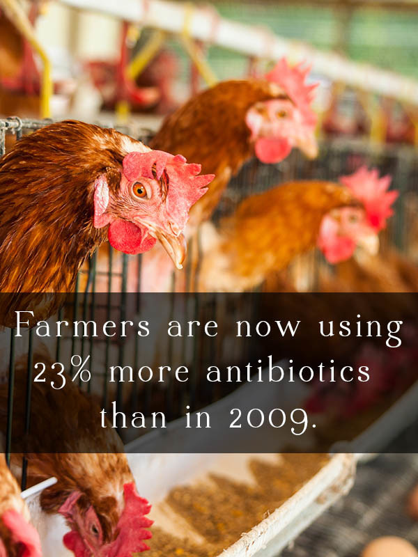 Farm antibiotic use increased yet again in 2014. Farmers are now using 23% more antibiotics than they were in 2009.