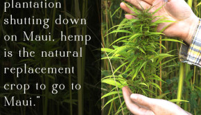 Hemp is a sustainable crop with uses from food to fuel to building materials. Growing hemp on Maui has the potential to transform the island's economy and the health of its residents.