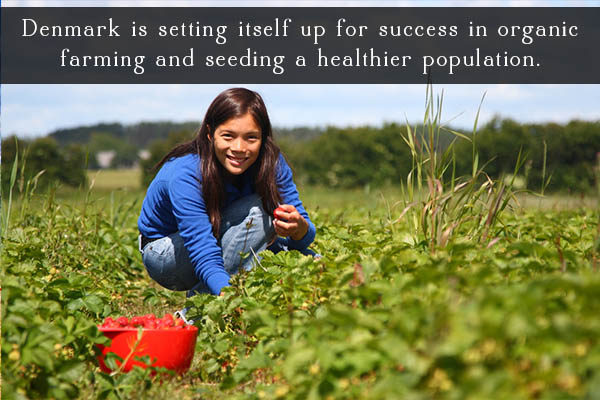 Denmark's organic movement is growing like gangbusters. Here's why that's important and why it's good for people's health and food security in Denmark.