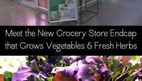 Berlin's Metro Cash & Carry supermarket is piloting a grocery store indoor farm that produces herbs and veggies on-site, right in the store.