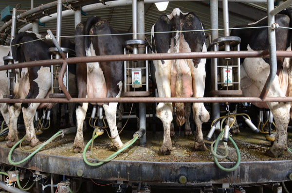 An upcoming training session will show you how to talk about factory farming.
