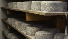 Despite mountains of evidence linking dairy foods to poor health, the USDA is buying a mountain of cheese and giving it to poor people.