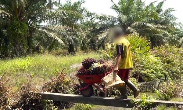 Palm oil is in hundreds of products is devastating for people and planet. Learn why palm oil is a problem and about the fight for more sustainable palm oil.