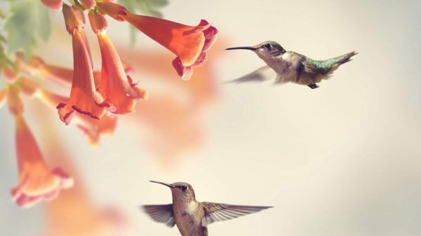 Climate change, pesticides, and habitat loss put pollinators - and our food supply - at risk. Here's how you can help protect pollinators.